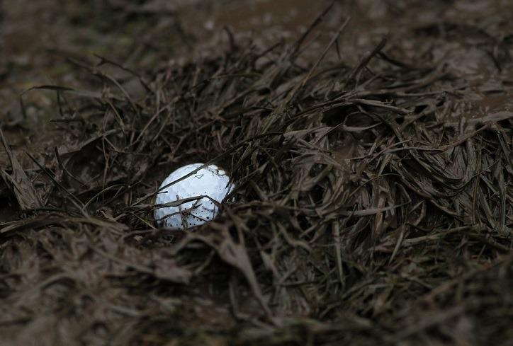 golf-winter-rules